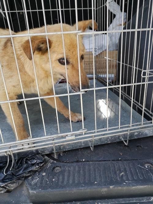 Stérilisation animaux errants à AKSAKOVO - 30 mai au 8 juin 2018 Iris_b14