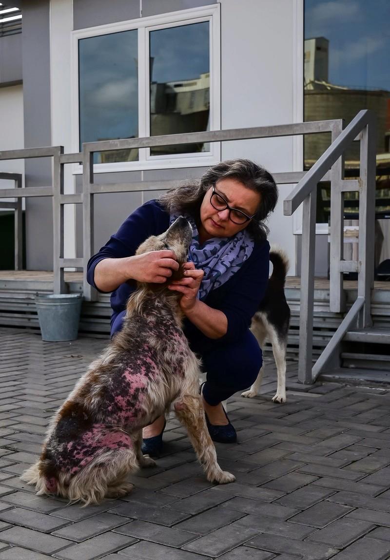 Campagne de stérilisation des chiens errants - PROVADIA - avril 2018 Lef_lh11