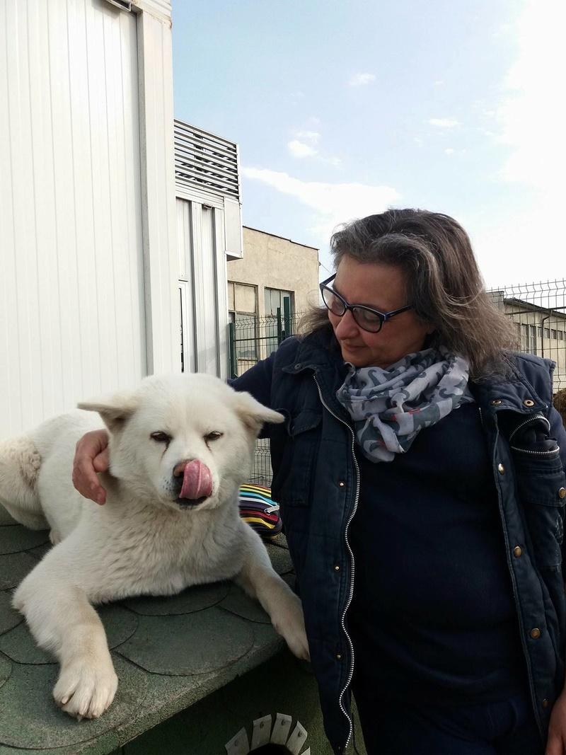 Campagne de stérilisation des chiens errants - PROVADIA - avril 2018 Lef_va10