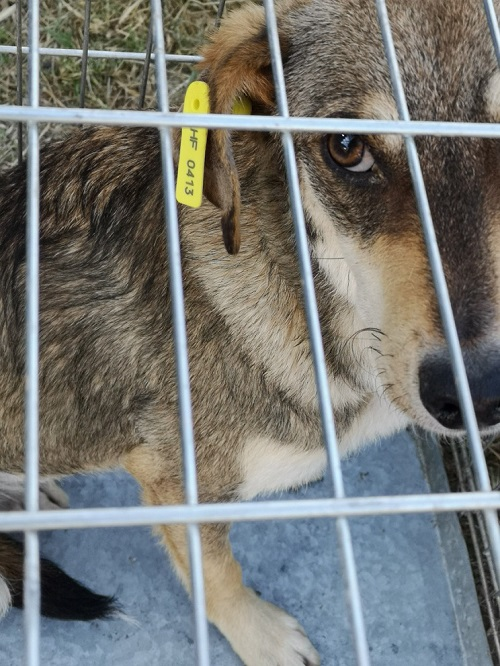 Stérilisation animaux errants à AKSAKOVO - 30 mai au 8 juin 2018 Lhf_4120
