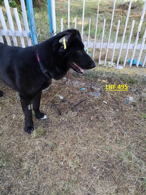 Stérilisation animaux errants à AKSAKOVO - 30 mai au 8 juin 2018 Lhf_4910