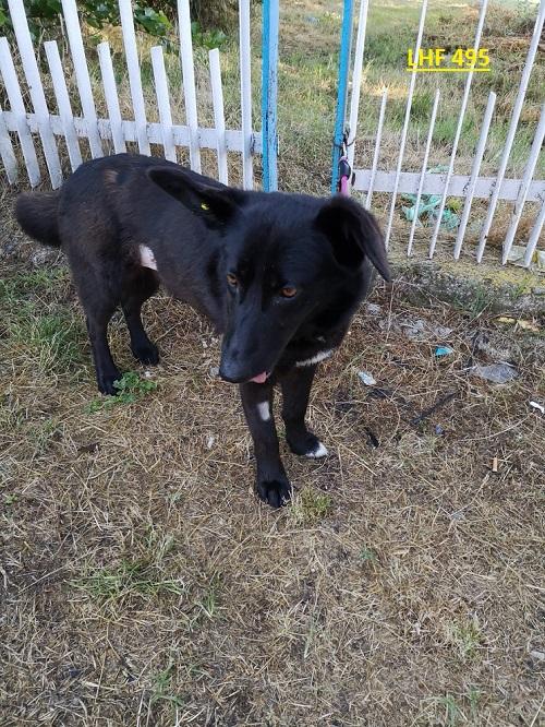 Stérilisation animaux errants à AKSAKOVO - 30 mai au 8 juin 2018 Lhf_4912
