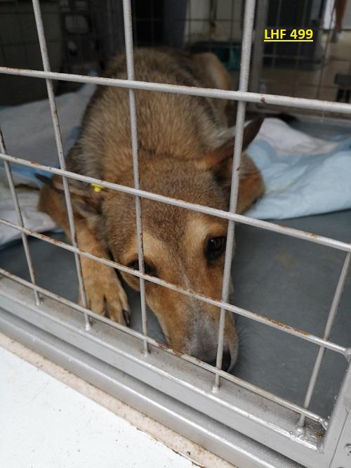 Stérilisation animaux errants à AKSAKOVO - 30 mai au 8 juin 2018 Lhf_4913
