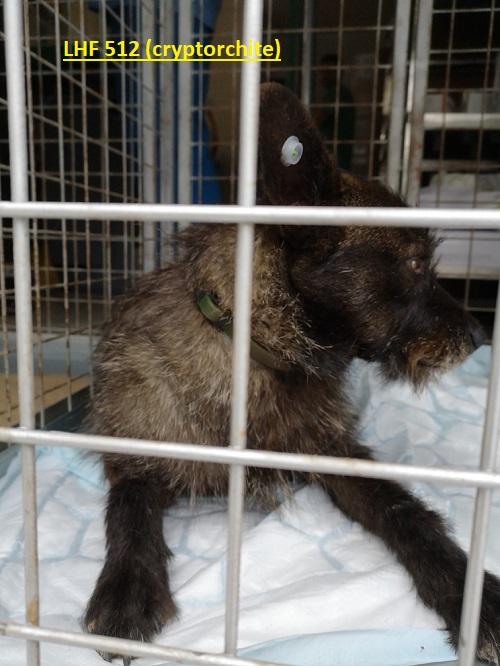 Stérilisation animaux errants à AKSAKOVO - 30 mai au 8 juin 2018 Lhf_5110
