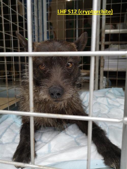 Stérilisation animaux errants à AKSAKOVO - 30 mai au 8 juin 2018 Lhf_5111