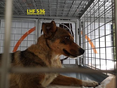 Stérilisation animaux errants à AKSAKOVO - 30 mai au 8 juin 2018 Lhf_5311