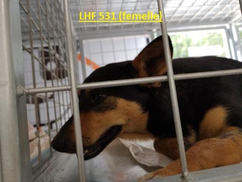Stérilisation animaux errants à AKSAKOVO - 30 mai au 8 juin 2018 Lhf_5312