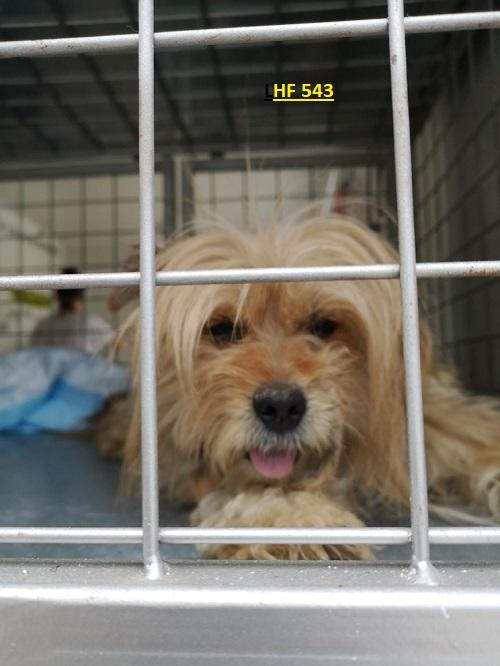 Stérilisation animaux errants à AKSAKOVO - 30 mai au 8 juin 2018 Lhf_5411