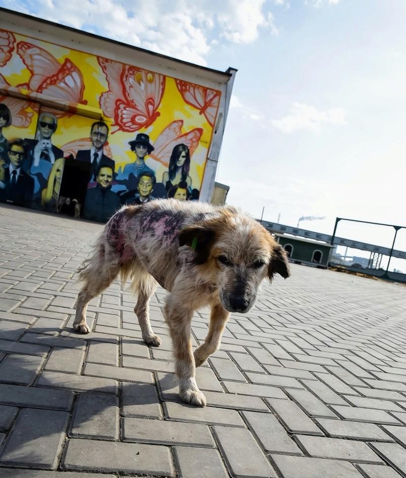 Campagne de stérilisation des chiens errants - PROVADIA - avril 2018 Lhf_ch10