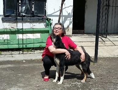 Campagne de stérilisation des chiens errants - PROVADIA - avril 2018 Myrdjo10