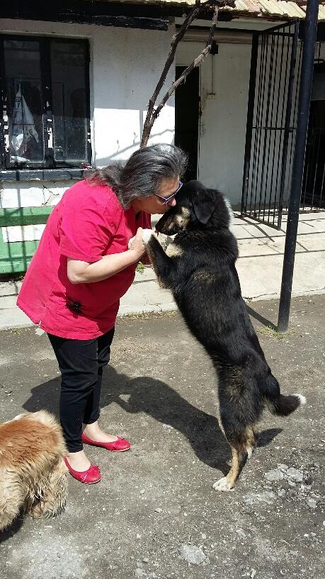 Campagne de stérilisation des chiens errants - PROVADIA - avril 2018 Myrdjo13