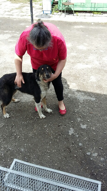 Campagne de stérilisation des chiens errants - PROVADIA - avril 2018 Myrdjo15