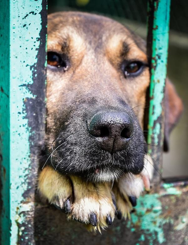 Campagne de stérilisation des chiens errants - PROVADIA - avril 2018 Provad10