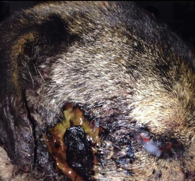 Stérilisation animaux errants à AKSAKOVO - 30 mai au 8 juin 2018 Verona13