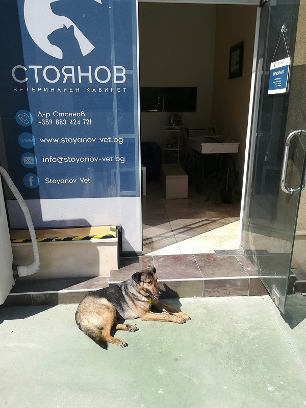 Stérilisation animaux errants à AKSAKOVO - 30 mai au 8 juin 2018 Verona18