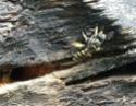 Un nouveau nid! Guepe311