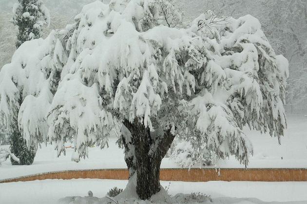 """Concours """"l'hiver des fous jardiniers"""" - les votes 7_anvi10"""