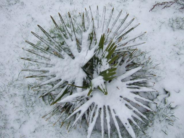 """Concours """"l'hiver des fous jardiniers"""" - les votes Dscf2416"""