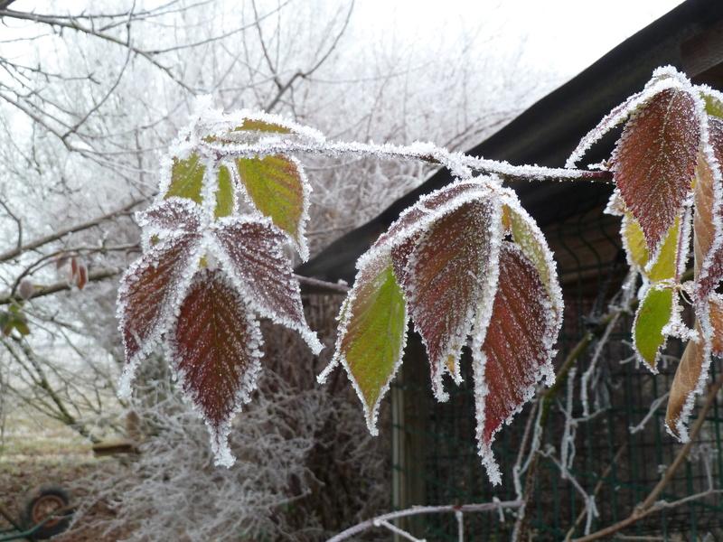 """Concours """"l'hiver des fous jardiniers"""" - les votes P1270710"""