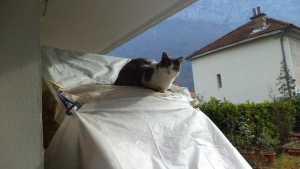 Filou, un chat qui s'apprivoise avec le temps Dsc08910