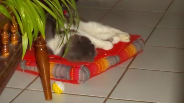 Filou, un chat qui s'apprivoise avec le temps Dsc09210