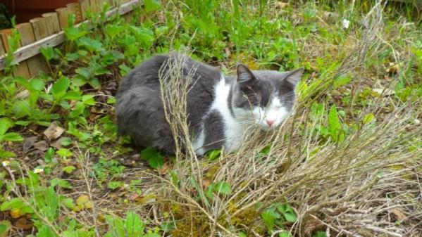Filou, un chat qui s'apprivoise avec le temps Dsc09211