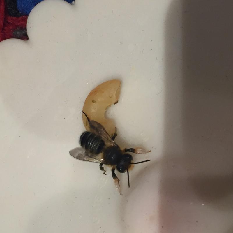 Dilemme : Une ruche dans une cheminée Image14