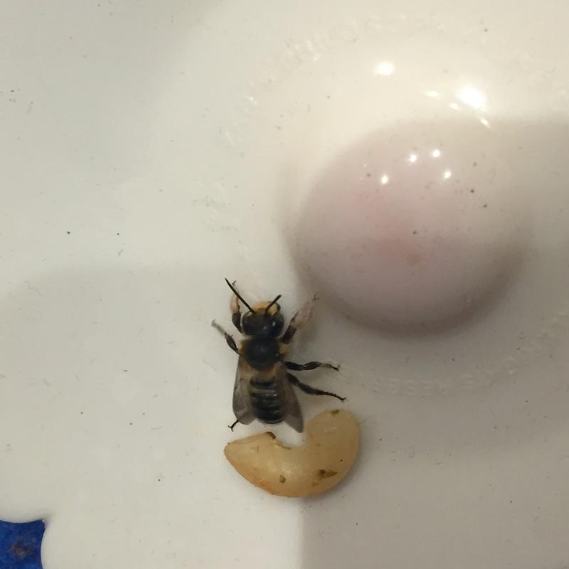 Dilemme : Une ruche dans une cheminée Image15
