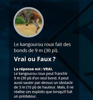 VRAI ou FAUX Animau10
