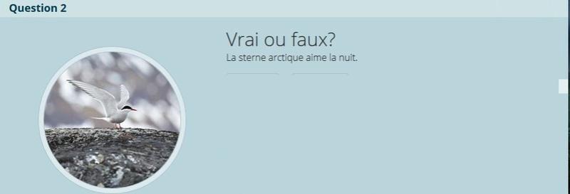 VRAI ou FAUX - Page 2 Copie_28