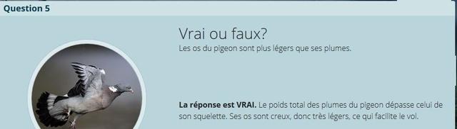 VRAI ou FAUX - Page 2 Copie_32