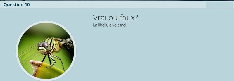 VRAI ou FAUX - Page 2 V-f_n110