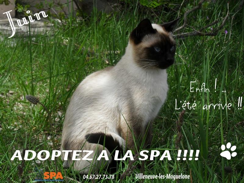 Spa Montpellier, adoption de chats et de chatons - Portail Affich17