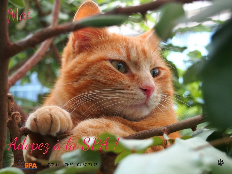 Spa Montpellier, adoption de chats et de chatons - Portail Ipiccy12