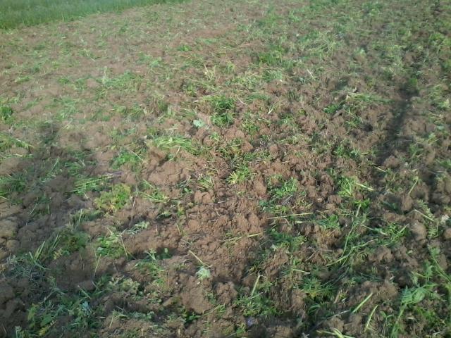 destruction de couvert - Page 20 Photo032