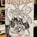 Pour patienter - Page 18 Spider15