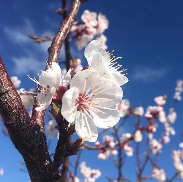 Pour semer des fleurs dans le coeur ... - Page 3 29511111