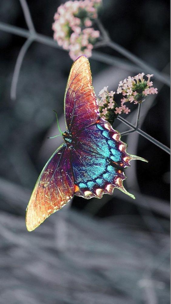 Pour semer des fleurs dans le coeur ... - Page 2 9749f810