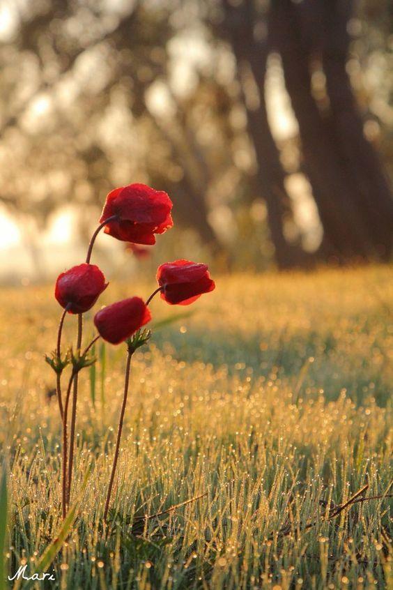 Pour semer des fleurs dans le coeur ... - Page 3 Tumblr14