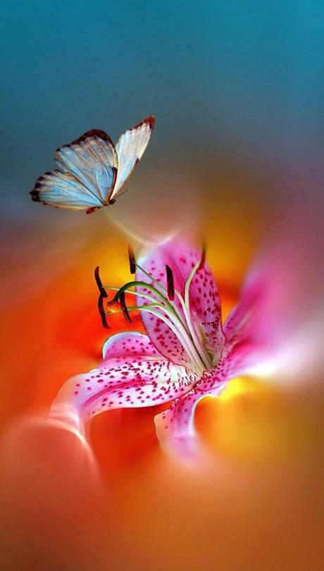 Pour semer des fleurs dans le coeur ... - Page 3 Tumblr16