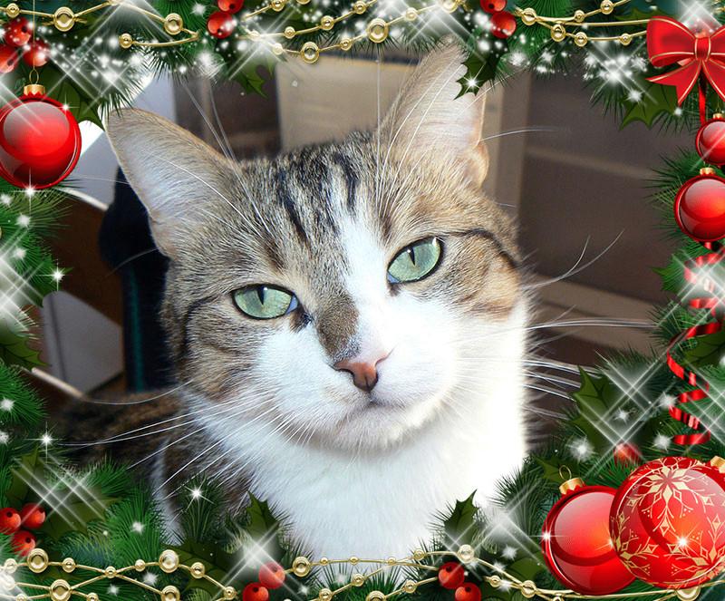 Grand concours d'avatar de Noël 2017 ! - Page 5 Gimli_10