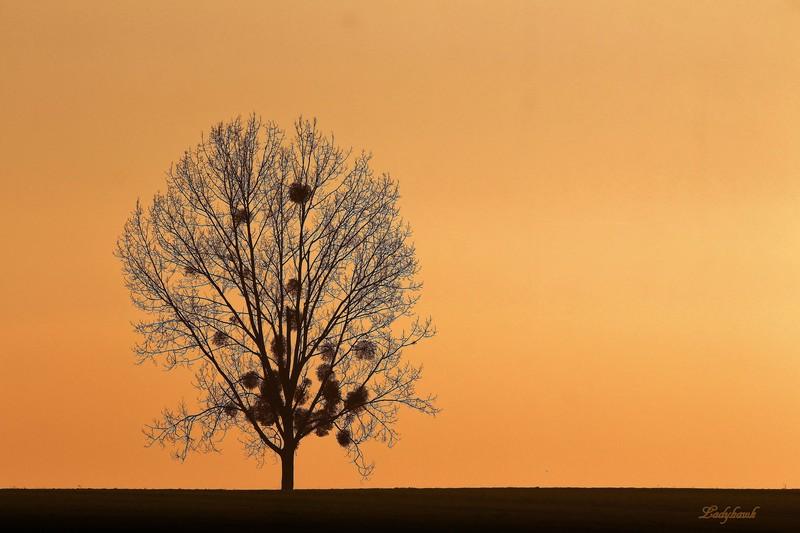 l'arbre nu L_arbr10