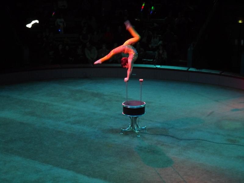 comme tous les ans , en 2018 cirque pour moi en janvier  Sam_2814