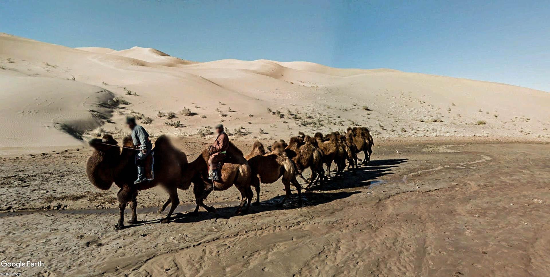 Parc national de Gobi Gurvansaikhan, sud de la Mongolie.  Gobi_g11