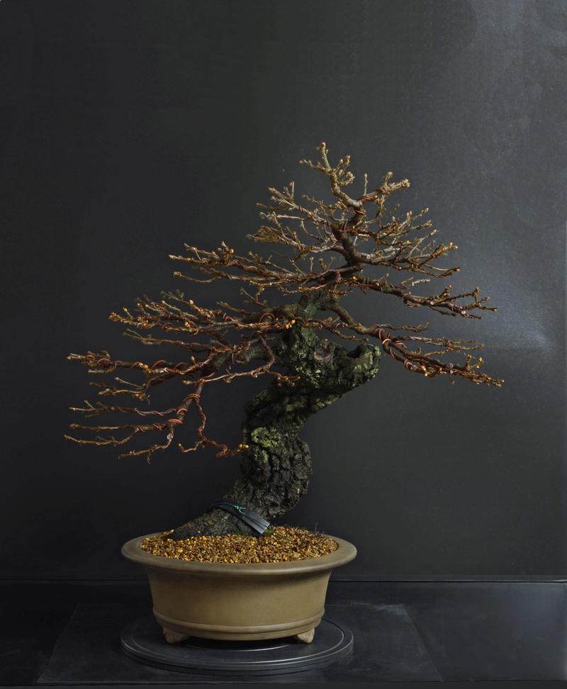Quercus cerris - Pagina 8 1--rin11