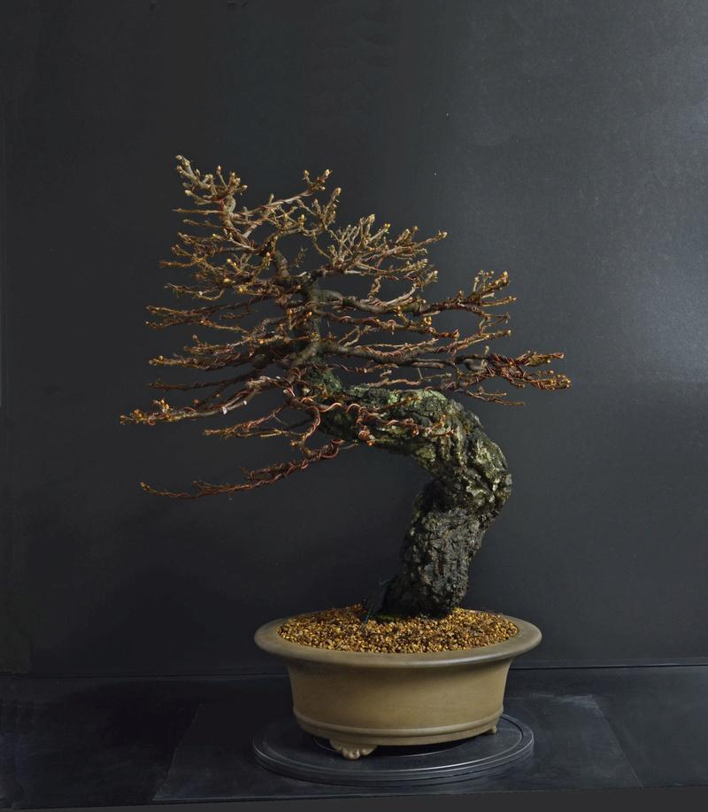 Quercus cerris - Pagina 8 2--rin11