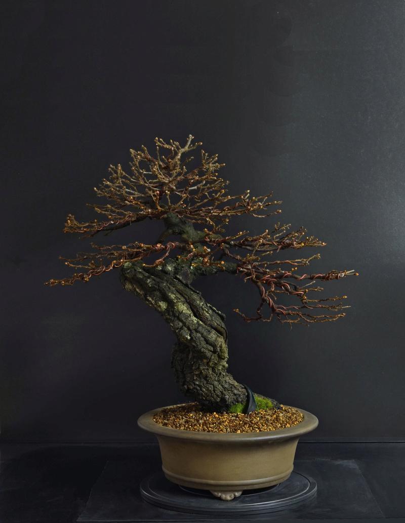 Quercus cerris - Pagina 8 3--rin12