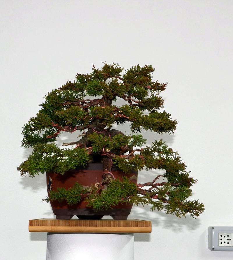 Itoigawa-PF Junipe14
