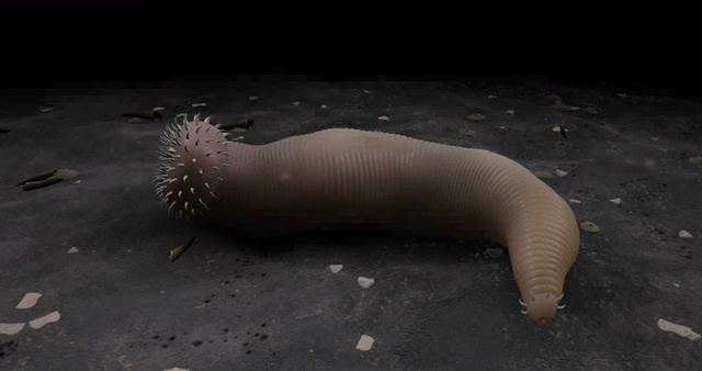 Ottoia - priapulid worms from the Cambrian 0a1-ot10