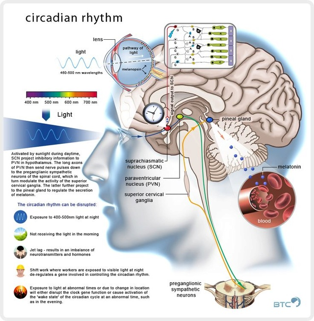 "The seven day Circadian Rhythms: ""Nature's Intricate Clockwork"" B768cc10"